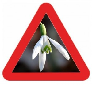 Car-drivers-as-snowdrops-start
